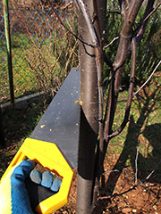 sawing off a tree branch