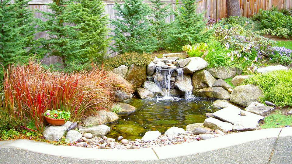 Backyard Waterfall & Pond