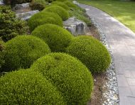 Shaped Hedging