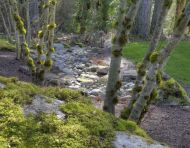 Mossy Boulder Drainage